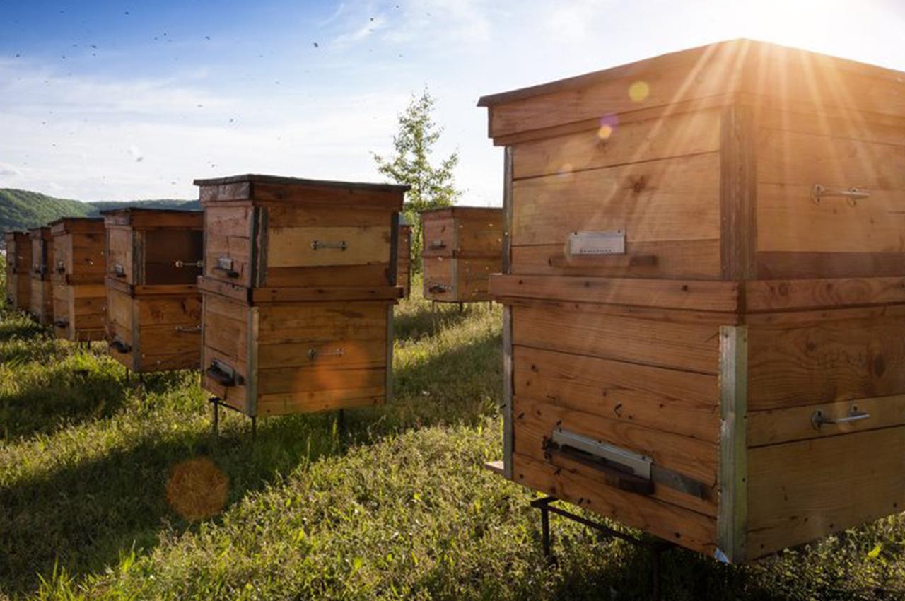 Un rucher pédagogique de Ste-Rita